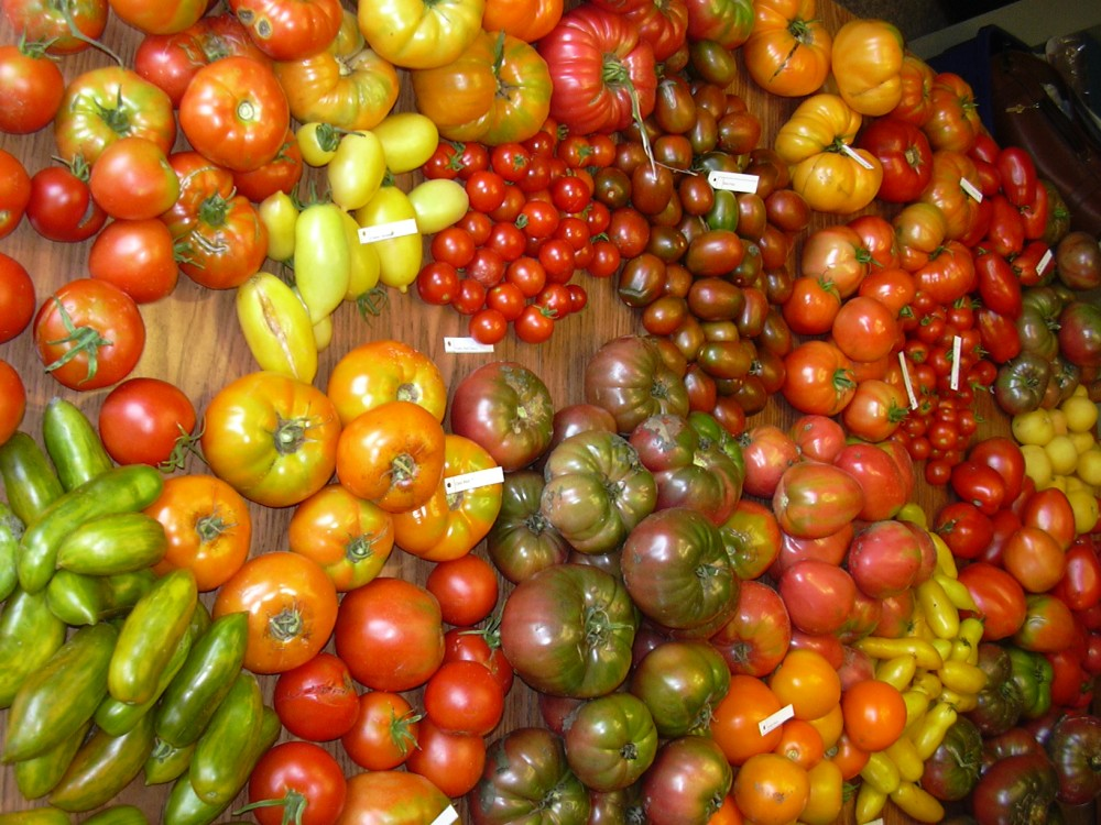I say tomato..... (2/3)