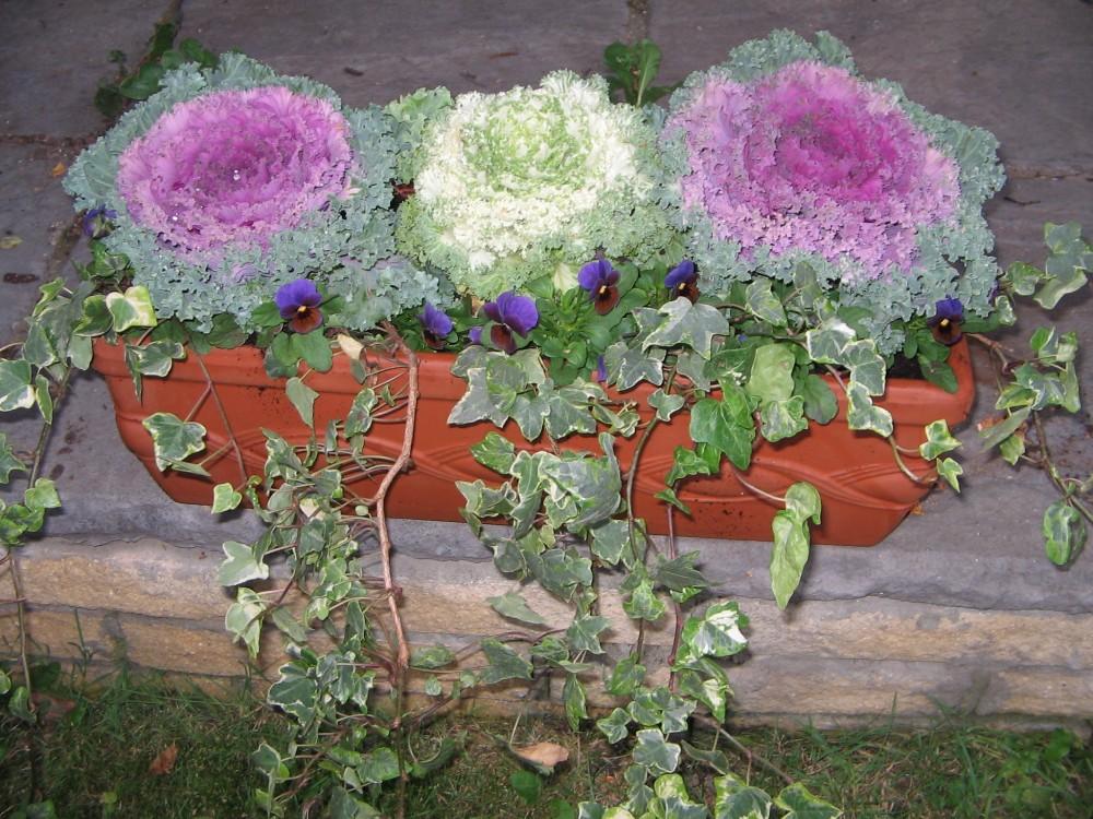 Autumn Colour - Autumn Planters (4/5)